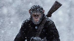 Обои Обезьяны Ружьё Планета обезьян: Революция Снег 2014 Фильмы фото