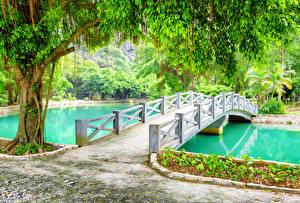 Обои Вьетнам Парки Пруд Мосты Деревья Ninh Binh Province Природа фото