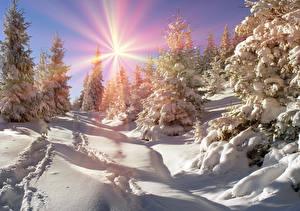 Обои Украина Времена года Зима Закарпатье Снег Ель Солнце Природа