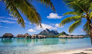 Обои Французская Полинезия Тропики Побережье Море Пейзаж Бора-Бора Бунгало Пальмы Природа фото