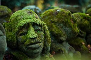 Фотографии Скульптуры Крупным планом Мох Голова