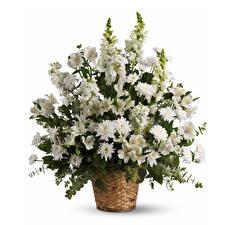 Обои Букеты Альстрёмерия Хризантемы Львиный зев Белый фон Корзинка Белый Цветы фото