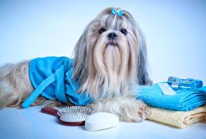 Собаки Полотенце Ши-тцу Взгляд Животные