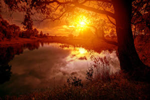 Обои Пейзаж Рассветы и закаты Реки Ствол дерева Солнце Природа фото