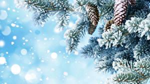 Фотографии Зимние Ветвь Шишки Снеге Природа