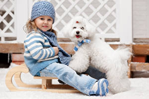 Обои Собаки Девочки Шапки Болоньез Взгляд Сани Дети Животные фото