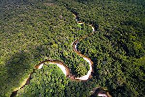 Обои Бразилия Леса Реки Сверху Amazon Jungle Природа фото