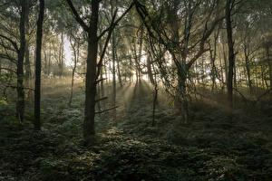 Обои Великобритания Леса Деревья Лучи света Stonecliffe Woods Природа фото