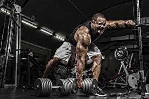 Фотографии Бодибилдинг Мужчины Гантели Спортзал Мышцы Тренировка