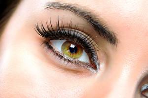 Обои Глаза Крупным планом Ресница Девушки фото