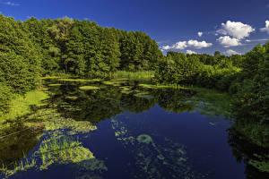 Обои Украина Леса Poltava Природа фото