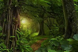 Обои Тропики Леса Ствол дерева Лучи света Трава Деревья Jungle Природа фото