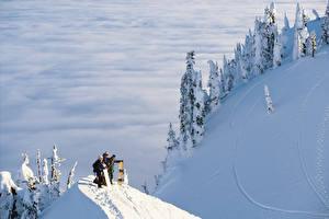 Фото Сезон года Зима Сноуборд Снег Ель Природа