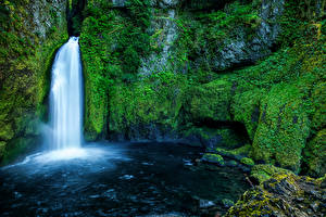 Картинка США Водопады Мох Скала Wahclella Falls Oregon