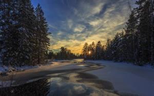 Обои Швеция Зима Вечер Небо Рассветы и закаты Ель Снег Arvika Природа фото