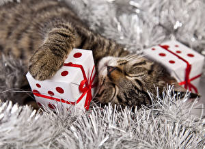 Картинки Коты Рождество Подарки Спит Кубик Животные
