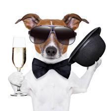 Картинки Собака Белый фон Джек-рассел-терьер Очках Шляпа Бокалы Бантик Забавные Галстук-бабочка животное