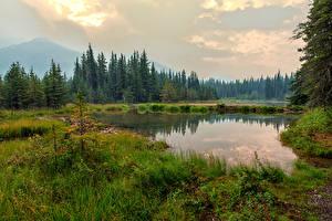 Обои Аляска Парки Озеро Леса Трава Denali National Park Horseshoe Lake Природа фото