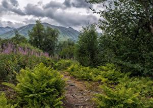 Фотография Аляска Парки Горы Кусты Облака Chugach National Forest Природа