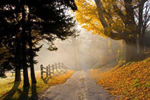 Обои Осенние Парки Дороги Деревья Туман Ограда Природа