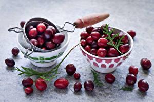 Фото Ягоды Клюква Цветной фон Ветвь Cranberry Продукты питания