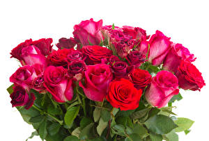 Фото Букеты Розы Крупным планом Белый фон Цветы