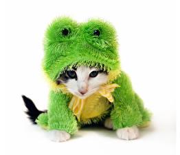 Обои Коты Лягушки Белый фон Униформа Взгляд Смешные