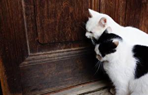 Фотографии Кошка Вдвоем Дверь животное