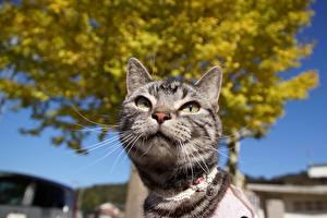 Обои Кошки Усы Вибриссы Взгляд Животные фото