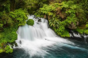 Фотографии Чили Парки Водопады Кусты Conguillio National Park