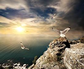 Фото Крым Россия Чайки Рассвет и закат Небо Море Побережье Скала Природа