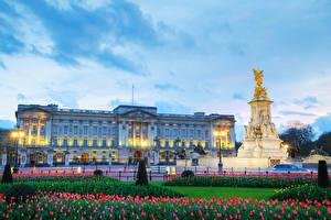 Обои Англия Вечер Памятники Тюльпаны Небо Лондон Дворец Уличные фонари Buckingham palace Города фото
