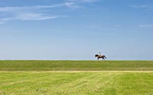 Обои Поля Небо Лошади Природа фото