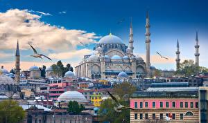 Картинка Стамбул Турция Дома Храмы Птицы Мечеть Облачно Города