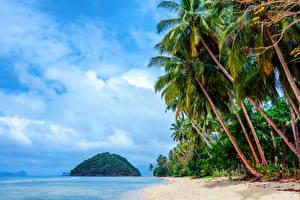 Обои Филиппины Тропики Побережье Небо Пальмы Пляж Природа фото