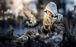 Фотография Голуби Мальчишка Капюшон Дети