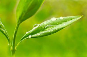 Фото Растения Крупным планом Макро Капли Листья Природа
