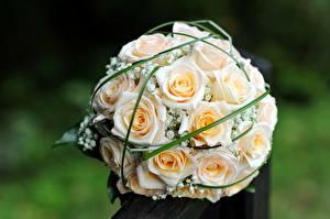 Картинки Розы Букеты Белый Цветы