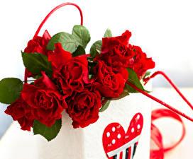 Картинки Розы Крупным планом Красный Цветы