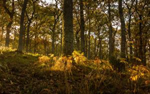 Обои Шотландия Леса Осень Ствол дерева Трава Деревья Pitlochry Природа фото