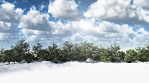 Обои Времена года Зима Ель Снег Облака Природа фото