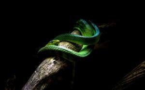 Фотография Змеи