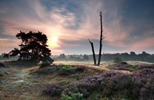 Обои Рассветы и закаты Небо Деревья Природа фото