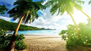 Картинки Тропики Море Пейзаж Пальмы Пляж