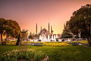 Картинки Турция Храмы Парки Фонтаны Тюльпаны Голубая мечеть Стамбул Мечеть Деревья Газон