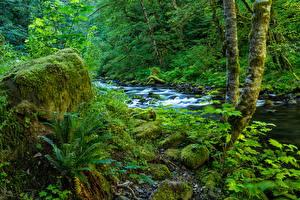 Фотографии Штаты Лес Пне Мох Ручей Wahclella Falls Oregon