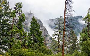 Картинки США Парк Горы Йосемити Ель Тумана Деревьев Природа