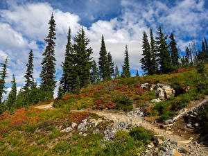 Картинка Америка Парк Камни Ели Траве Mt Rainer National Park Природа