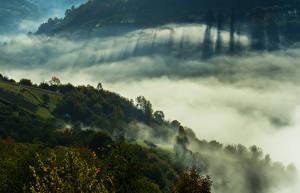 Обои Украина Горы Леса Закарпатье Туман Природа фото