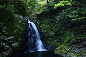 Обои Водопады Скала Мох Природа фото
